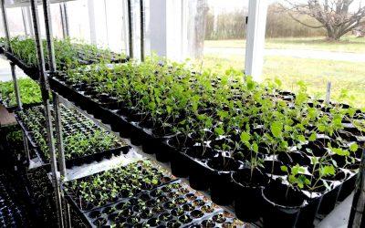 Grown Up Seedlings